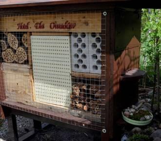 We Włodawie powstał pierwszy, specjalny hotel... dla owadów