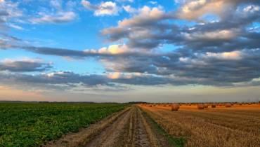 Susza panująca przez ostatnie tygodnie w całym regionie leszczyńskim przynosi dramatyczne skutki w rolnictwie i leśnictwie.
