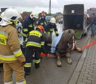 Koń przewrócił się na drodze wojewódzkiej w gminie Skała. Zwierzę było przewożone w przyczepie