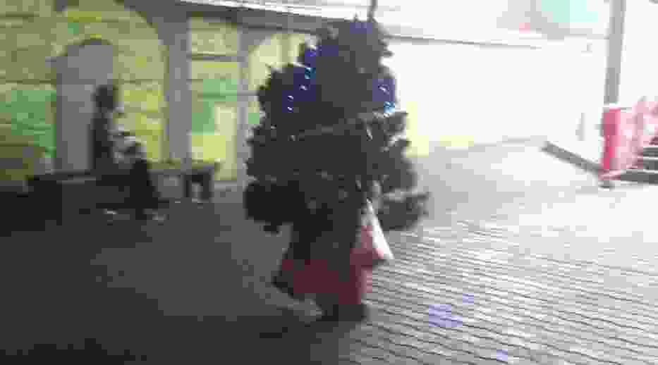 Człowiek choinka grasuje po Poznaniu