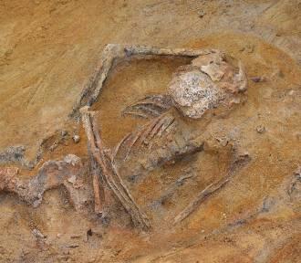 W Zielonej Górze znaleziono szkielety bez czaszek. Ktoś odciął głowy