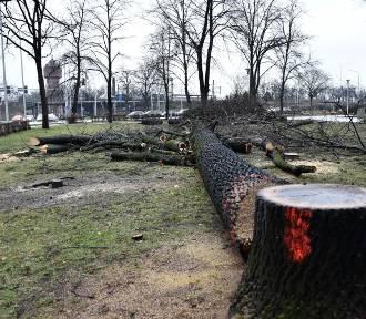 Kolejna wycinka drzew przy Opolu Wschodnim [WIDEO, ZDJĘCIA]