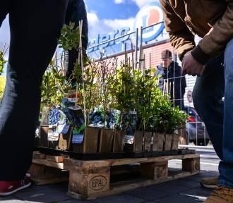Drzewko za makulaturę 2018: Gdzie można oddać makulaturę i elektrośmieci? Sadzonki, które można