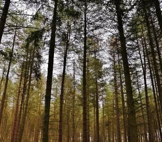 Posadź swoje drzewo w ramach drugiej edycji akcji #sadziMY