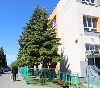 Z podwórka szkoły ma zniknąć 30 drzew. Dyrekcja: Szkoda, ale trzeba