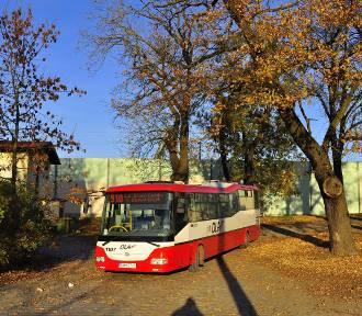 Dolnośląskie Linie Autobusowe będą obsługiwały komunikację miejską w Oleśnicy