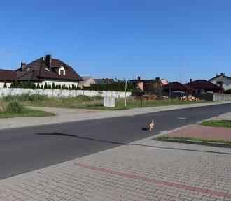 375 tys. dla powiatu krotoszyńskiego na remonty dróg! [ZDJĘCIA]