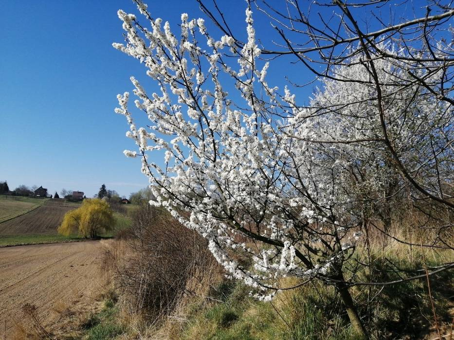 Bażanty, sarny, zające a także mnóstwo roślin budzących się do życia po zimowej przerwie