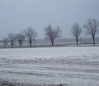 Trochę zimy tej wiosny w obiektywach naszych czytelników  - 31.03.2020