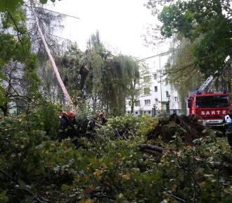 Park Żywiecki po orkanie Ksawery. Drzewa łamały się jak zapałki [ZDJĘCIA]