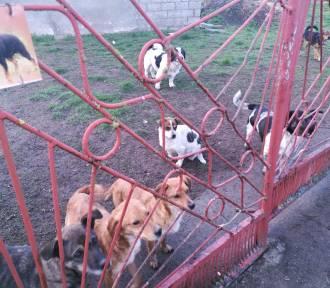 Help Animals poszukuje domów dla porzuconych psów. Połowa z nich to suczki w ciąży