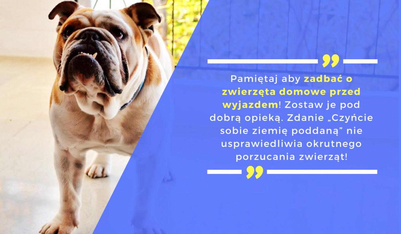 Pamiętaj aby zadbać o zwierzęta domowe przed wyjazdem! Zostaw je pod dobrą opieką