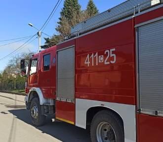 Strażacy z powiatu brodnickiego uratowali bobra, gasili pożary i reanimowali kobietę