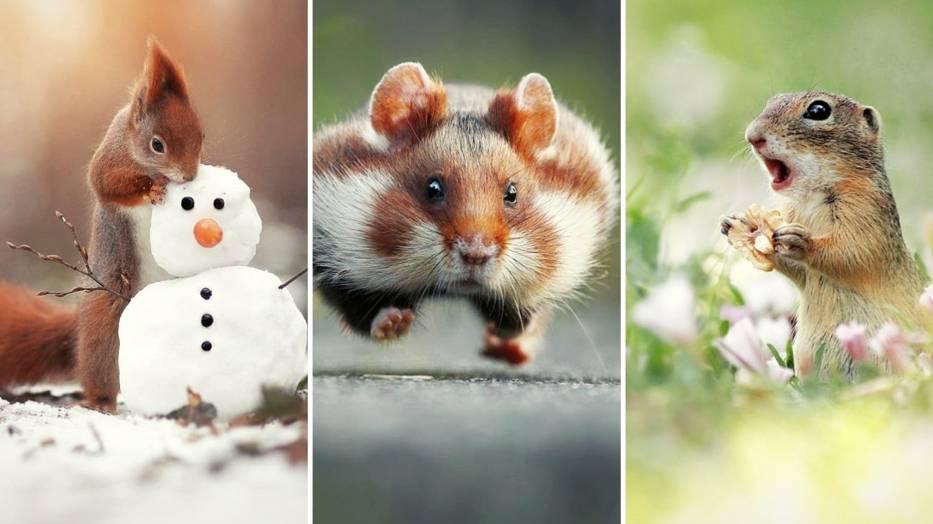 Fotografowanie dzikich, szybkich i płochliwych zwierząt to niełatwe zadanie, wymagające ogromnej cierpliwości