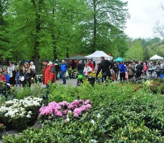 Kilkadziesiąt szkółek ogrodniczych z całej Polski. Kolorowy zawrót głowy na Partynicach