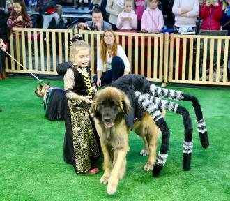 Pies to czy pająk? Psie przebieranki w Targach Kielce [ZDJĘCIA]
