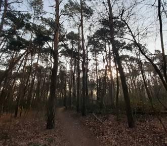 Koronawirus. Zakaz wchodzenia do lasu dotyczy także myśliwych!