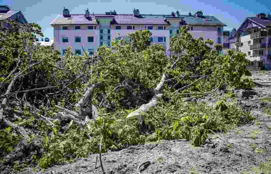Wycinka drzew przy ul