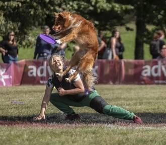 Dla tych psów grawitacja zdaje się nie istnieć. Zobacz zdjęcia z zawodów!