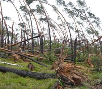 Nadleśnictwo Czersk udostępniło lasy niedostępne dla osób postronnych od nawałnicy z 11 sierpnia