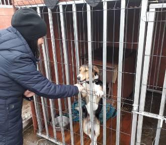 Psy i koty ze schroniska w Mysłowicach szukają domu ZDJĘCIA