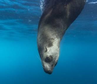 Specjalny zespół śledczych wyjaśni sprawę zabicia fok