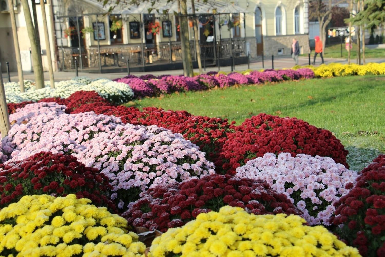 Barwne kompozycje z kilkuset sztuk roślin, w różnych odcieniach, pojawiły się w Jarosławiu m