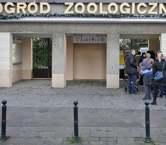 W Starym Zoo powstanie międzynarodowy film. Będzie casting