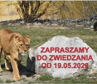 Zamojski Ogród Zoologiczny otwarty dla zwiedzających