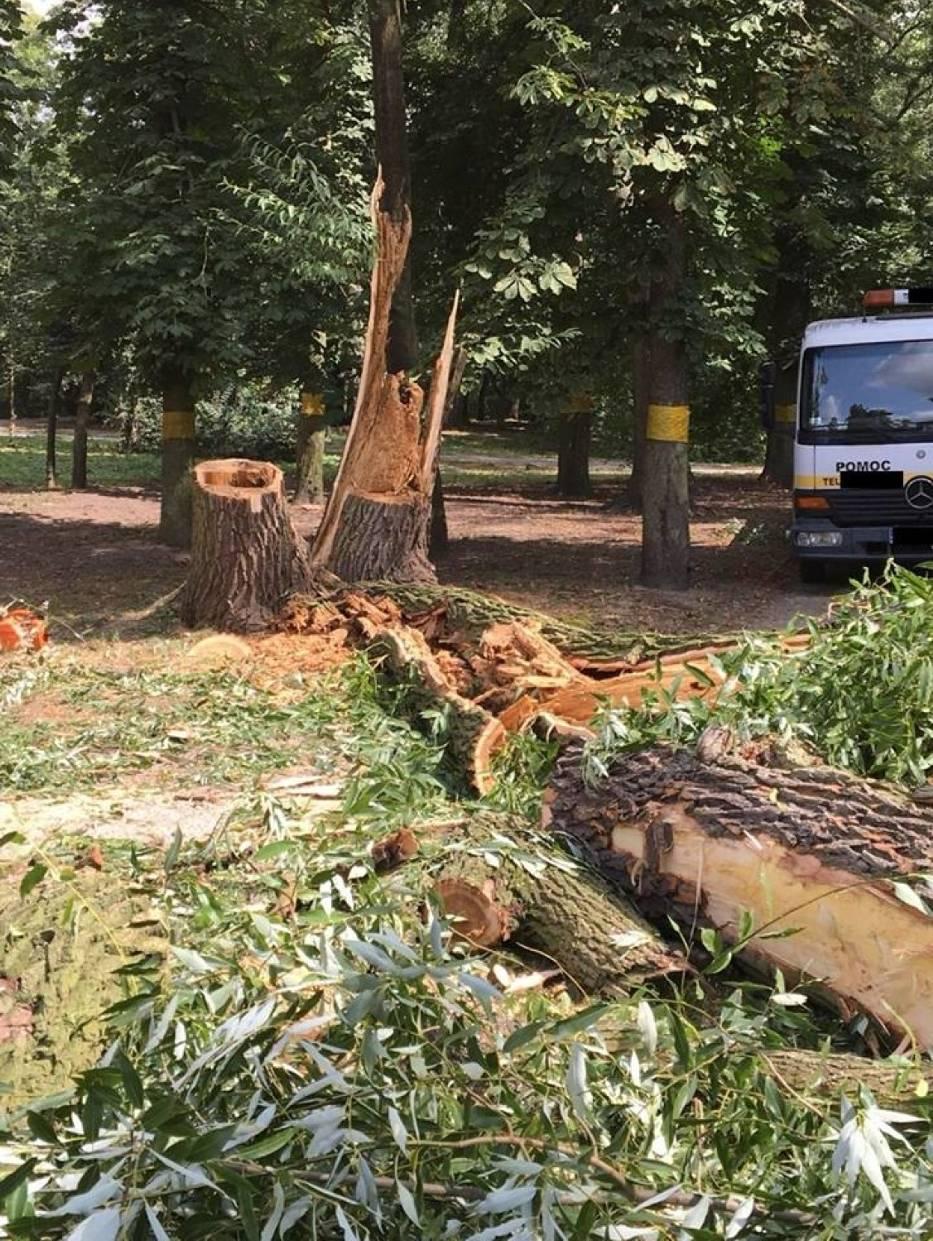 Wycinka w parku. Dlaczego gmina pozbywa się drzew?