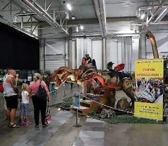 35 dinozaurów w Hali Expo. Zobaczcie zdjęcia!