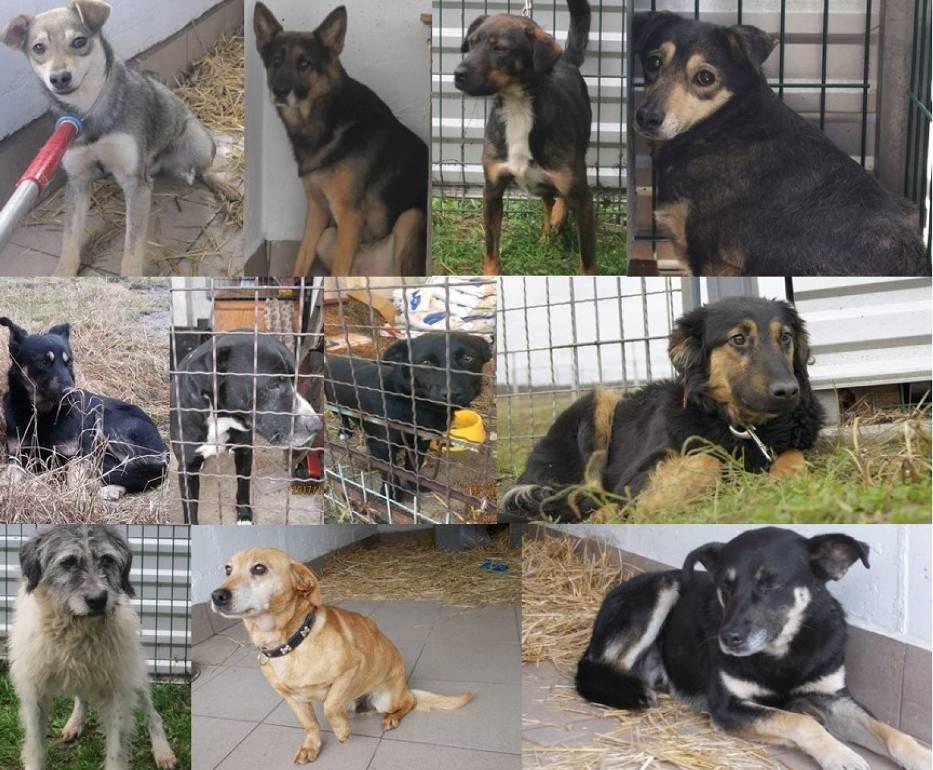 Psy do adopcji  czekają na Ciebie,  w schronisku dla zwierząt w Nowym Dworze