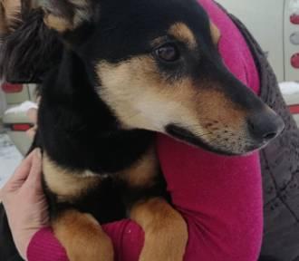 Głogów: Suczka Lara czeka w schronisku zwierząt na swój nowy dom