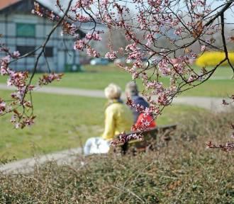 Pogoda na Wielkanoc będzie wiosenna. Spacery są wskazane [ROZMOWA]