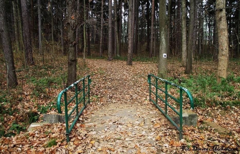 Wejście do parku leśnego