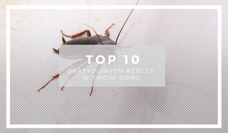 Czy wiesz z kim mieszkasz i śpisz? Zobacz TOP10 obrzydliwych rzeczy w Twoim domu!