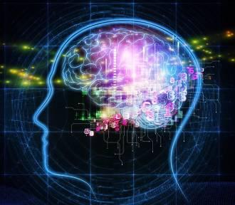 Mózg kobiet młodszy niż mózg mężczyzn. Nowe odkrycie