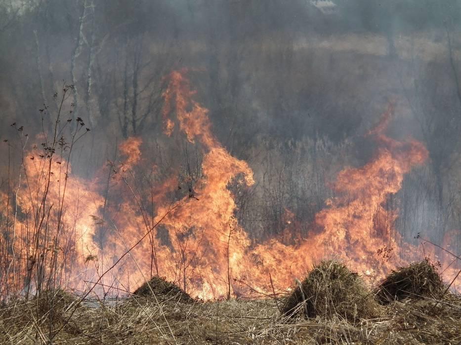 Zazwyczaj zaczyna się niewinnie,małe ognisko,rzucony niedopałek papierosa albo ludzka głupota - słynne wypalanie traw