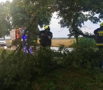 Burza w Szadku. Powalone drzewa zablokowały drogę w kierunku Poddębic. Interweniowała straż