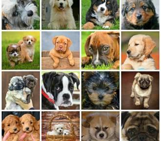 Top 50 najpopularniejszych imion dla psów oraz suczek 2021