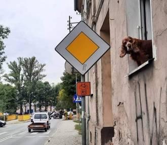 - No i kto tutaj rządzi zdaje się mówić dziarski spaniel spoglądając na ulicę