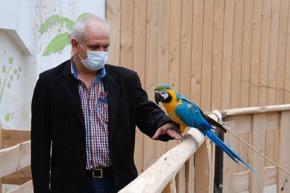 3. Papugarnia Carmen w Katowicach (ul. Obroki 77)