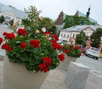 Olkuski rynek w kwiatach. Szał kształtów i kolorów