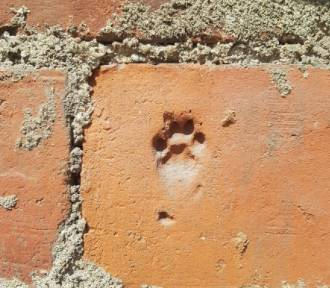 Kocia łapa sprzed 600 lat!