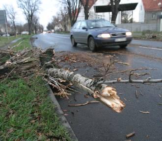 Wichury na Śląsku. W Chorzowie konar drzewa spadł na samochód na ul. Siemianowickiej