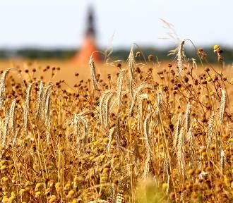Rolniku, pamiętaj o złożeniu wniosku o przyznanie płatności bezpośrednich na 2021 rok