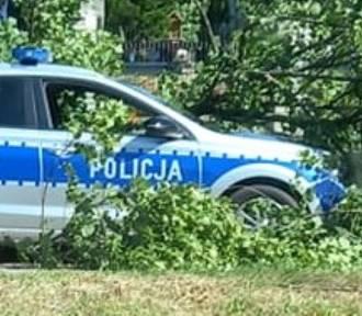 Konar drzewa runął na policyjny radiowóz w Darłowie ZDJĘCIA, WIDEO