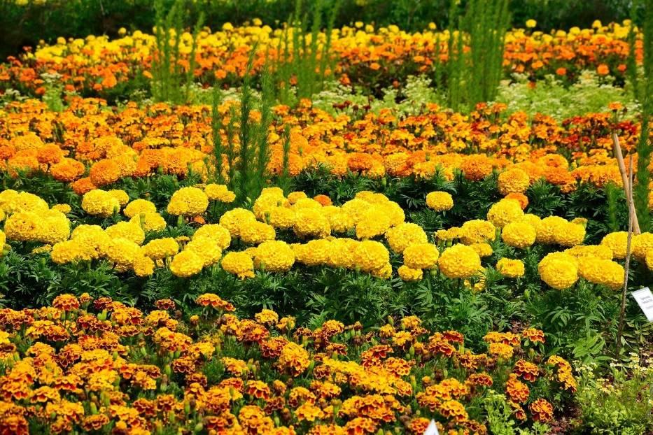 Pomarańczowe kwiaty ładnie komponują się m