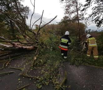 Lubuskie: silny wiatr łamie drzewa. IMGW ostrzega: wiać może nawet do 100 km/h