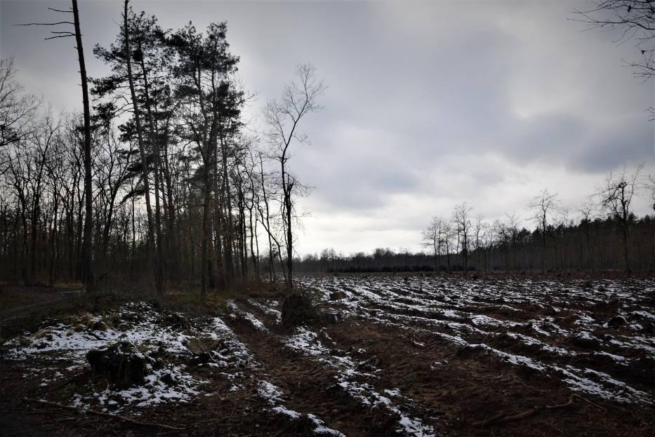 Lasy Państwowe wyjaśniają też, że na taką sytuację miało gradobicie z 2012 r